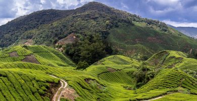 Cameron Highlands Malasia
