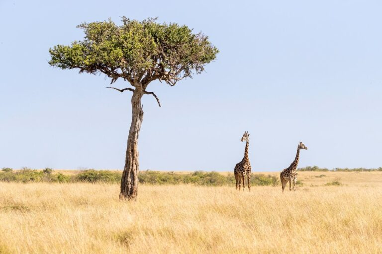 Kenia en diciembre: consejos de viaje, clima y más