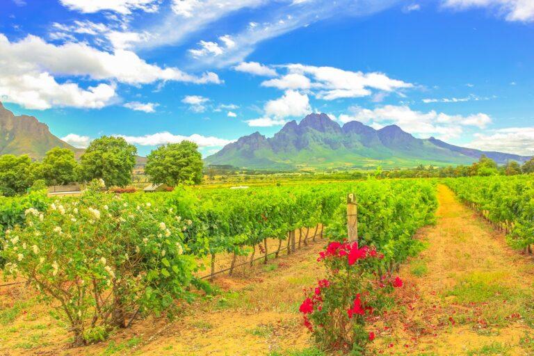 Ciudad del Cabo y ruta de los jardines – 8 días