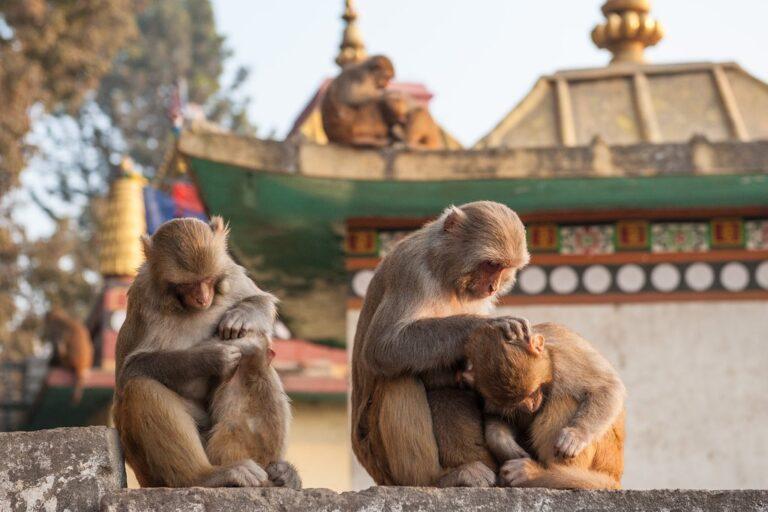 ¿Cuántos días debería pasar en Katmandú?